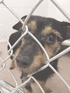The Humane Society of Genesee County is aiming to raise funds for new kennels at the 21st Annual Paws on Parade Champagne Brunch & Charity Auction. Photo provided