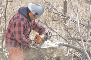 A man takes advantage of the state's fuelwood permits. Photo MI DNR