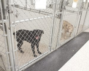 Some of the kennels at the Humane Society of Genesee County, G-3325 S. Dort Hwy., that the organization hopes to replace. Photo by Gary Gould