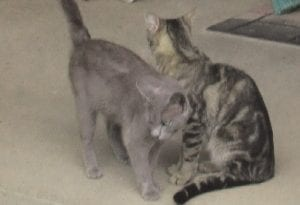 Two feral cats lounge on the front porch of the home of Lisa Olson.