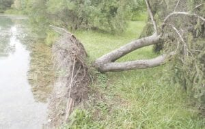 A fallen tree on the east bank of Kelly Lake in Burton. Photos by Gary Gould