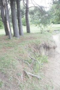 Signs of further soil erosion along Kelly Lake.